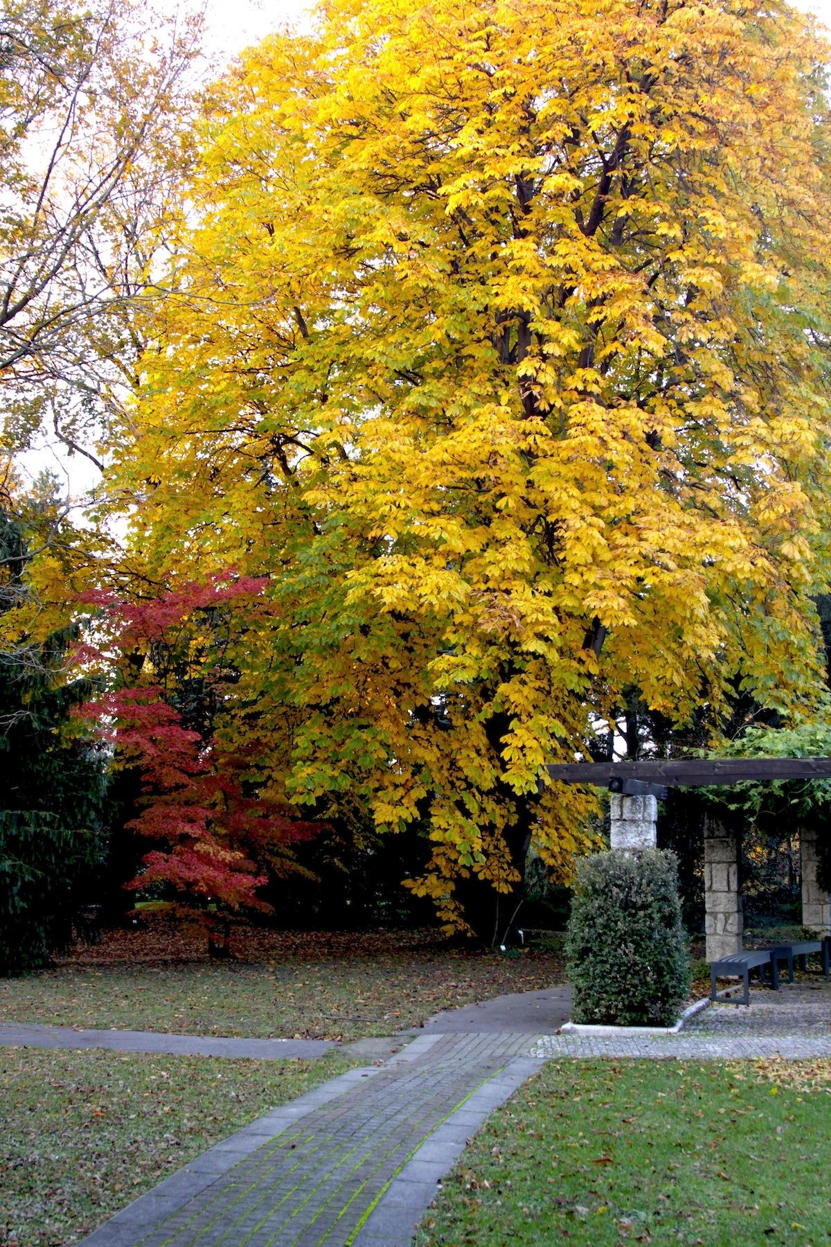 Japan_garden7