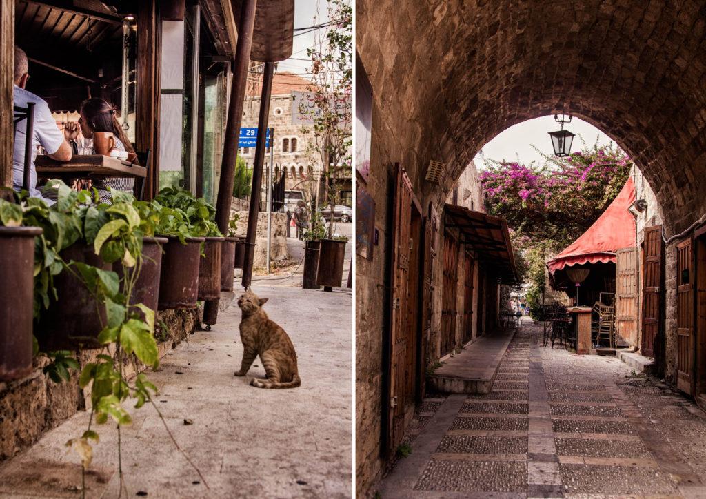 Byblos street cat